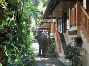 Elephant-Safari-Park-Lodge-Hotel-4