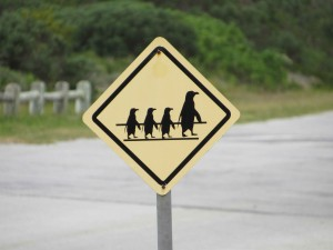 placa pinguim africa do sul